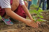 Kind pflanzt eine Blume in die Erde©Pixabay