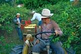 Bauern bei der Obsternte in Brasilien©Didier Gentilhomme