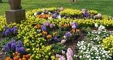 Das Foto zeigt die Frühjahrsbepflanzung auf dem Wilhelmsplatz.©DBM, Sonja Stender