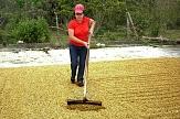 Kaffee-Verarbeitung  hier: Trockenen der Kaffeebohnen von der Kaffeeplantage in Honduras - von hier stammt der Kaffee des Marburger fairen Stadtkaffees - dem Elisabethkaffees, angebaut und verarbeitet von der Frauenorganisation COMUCAP©Weltladen Marburg