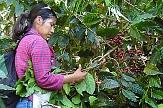 Kaffeeplantage in Honduras - von hier stammt der Kaffee des Marburger fairen Stadtkaffees - dem Elisabethkaffees, angebaut und verarbeitet von der Frauenorganisation COMUCAP©Weltladen Marburg