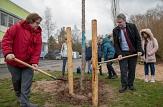 Gemeinsam mit den Schülerinnen und Schülern der Richtsberg-Gesamtschule haben Bürgermeister Wieland Stötzel und Stadträtin Kirsten Dinnebier geholfen, eine Japanische Zierkirsche zu pflanzen.©Stadt Marburg, Patricia Grähling